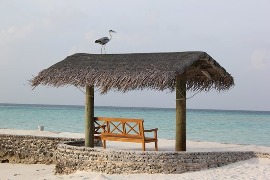 Rihiveli by Castaway Hotels & Escapes: Heron