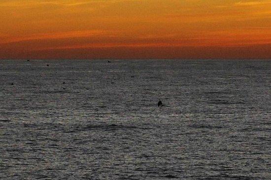 Hotel Rocce del Capo: delfini al tramonto