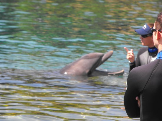 Discovery Cove: one of the many dolphins
