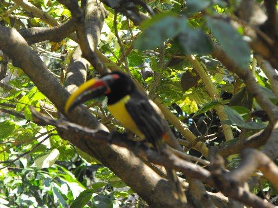 Discovery Cove: a toucan in the bird garden