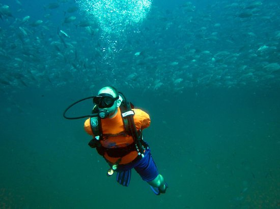 Pirate Divers: Schools of fish at Sail Rock