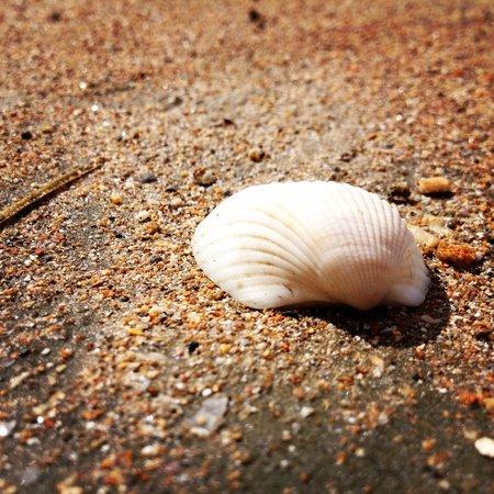 Langkah Syabas Beach Resort : Seashell