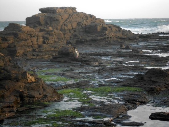 Curio Bay Natural Heritage Centre: Yellow-eyed penguin at Curio Bay