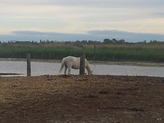 Mas des Barres : Vue sur les chevaux