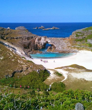 Ogasawara-mura, Japan: 白い砂浜の後ろを振り返れば、半化石の貝たち