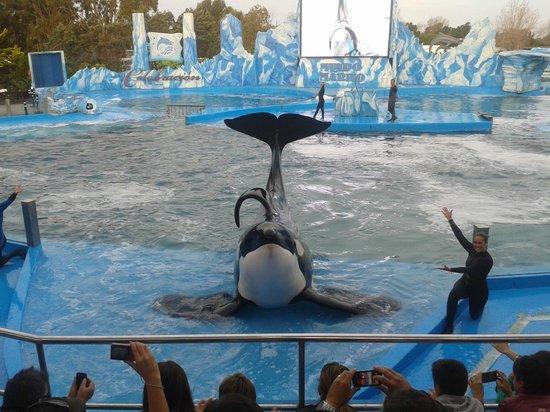 Mundo Marino: orca