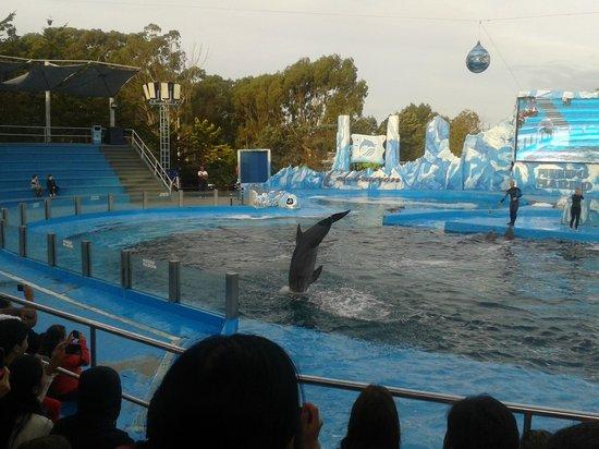 Mundo Marino: delfines
