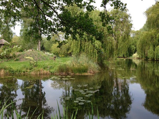 Gooderstone Water Gardens & Nature Trails: View from entrance of cafe