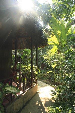 Bungalow photo de jardin du mekong homestay ben tre for Jardin du mekong homestay