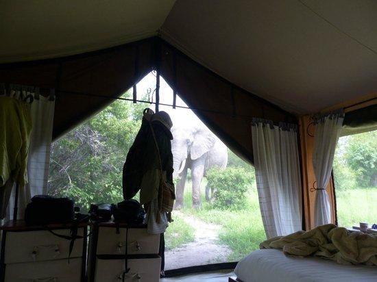 Kwihala Camp, Asilia Africa: elephant spotting from bed