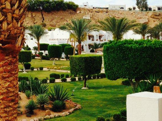 Sonesta Beach Resort & Casino : вид из нашего номера. возле ресторана ЛЕ ДОМ.