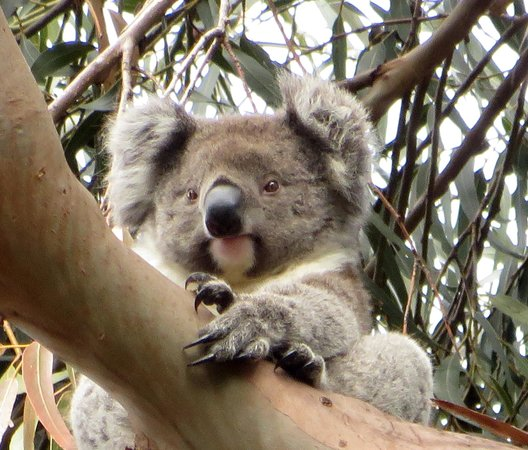 Hanson Bay Wildlife Sanctuary: 'I see you!'