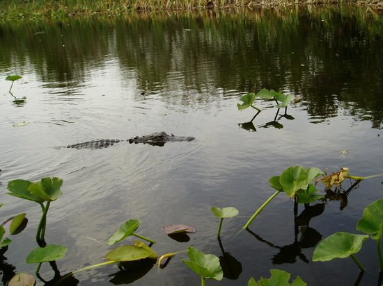 "Everglades Holiday Park : ""Miss Grumpy"" - one of the residents"