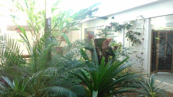 Pousada Baia das Conchas: Jardim
