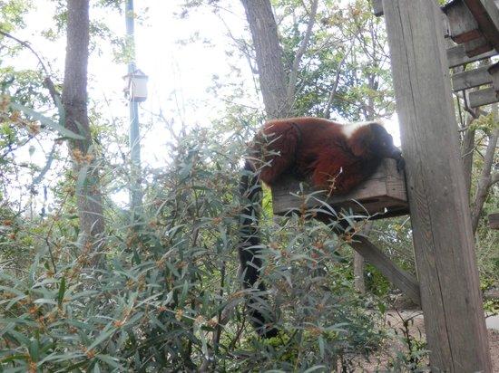 Faunia: Bosque africano