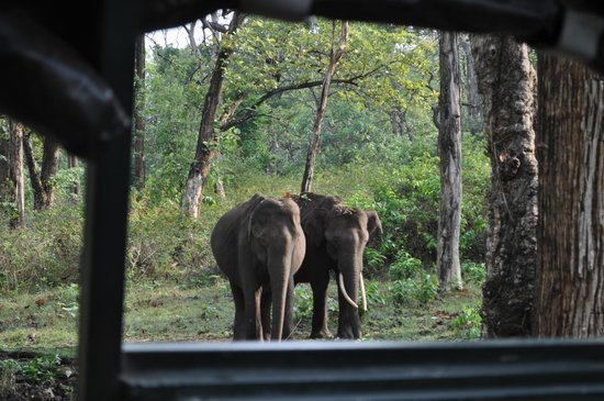 Evolve Back, Kabini: Jeep Safari
