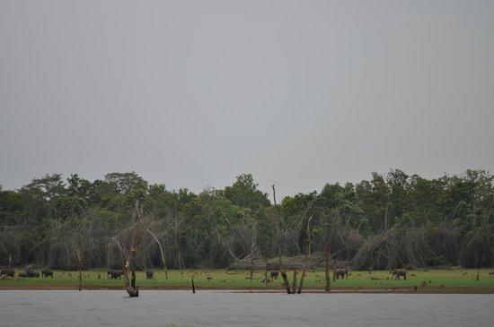 Orange County Resorts Kabini: Boat Safari