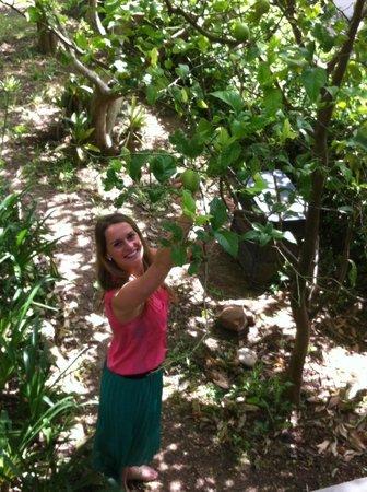 Arumvale Country House: Verse limoen plukken naast het huis