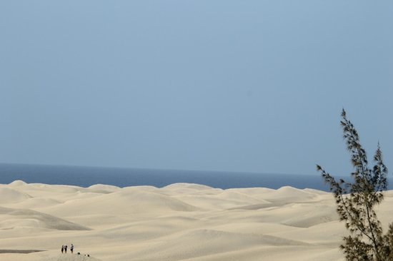 Seaside Sandy Beach : sand dunes