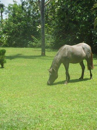Buckingham Place: Ginger the resident pony