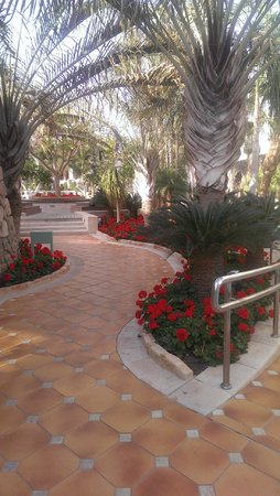Isrotel Agamim: grounds at pool