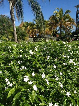 Secrets Wild Orchid Montego Bay : Lush landscape...throughout resort