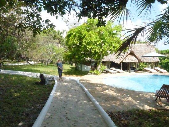 Ras Kutani: pool area