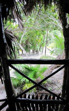 Poc-na Tulum : vegetazione tropicale