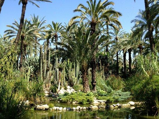 Jardin Huerto - Foto van Huerto Del Cura Jardin Artistico Nacional, Elche - T...