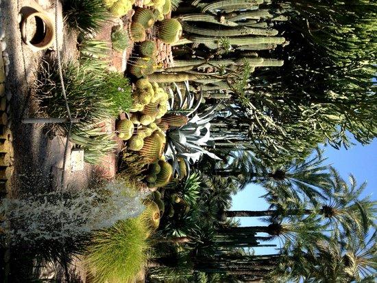 Jardín Artístico Nacional Huerto Del Cura: Jardin Huerto