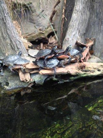 North Carolina Aquarium on Roanoke Island: Turtles!