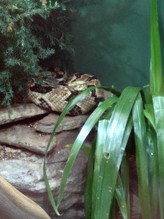 North Carolina Aquarium on Roanoke Island: Rattlesnake