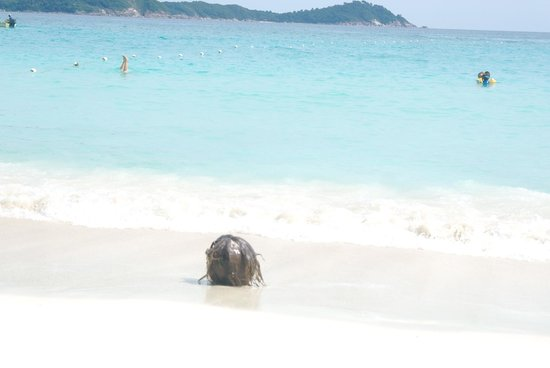 Perhentian Island Resort: cocco