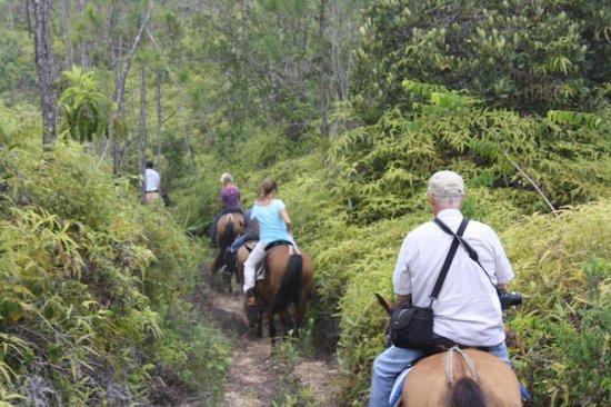 Mountain Equestrian Trails : Riding through the Mt. Pine Ridge