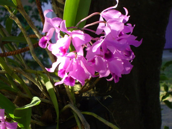 Enchanted Garden Inn: Orchids at The Inn
