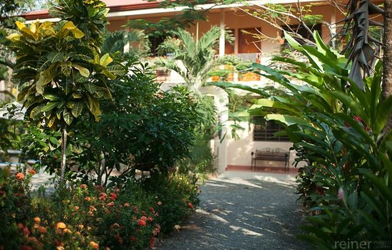 Tropical Sands Dominical Eco Inn : view of hotel gardens with rooms in background