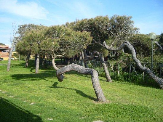 Golden Tulip Resort Marina di Castello: particolari di questi alberi