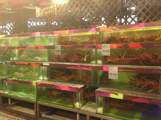South Sea Seafood: Crabs