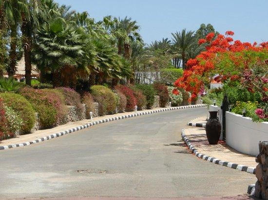 Maritim Jolie Ville Golf & Resort : Дорога