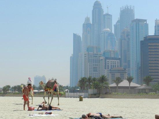 Cassells Al Barsha Hotel: Пляж в Дубай Марина