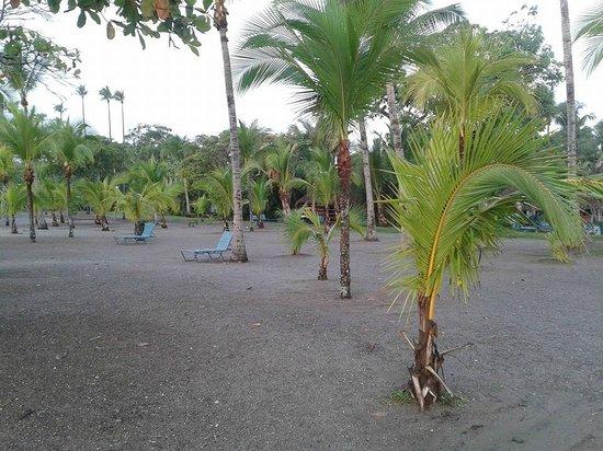 Barceló Tambor: Palmeras de la playa del hotel