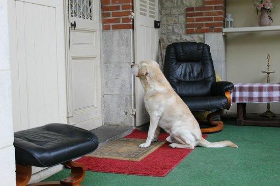 Chateau de Boisrobert : The friendly dog awaits some company
