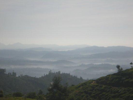 Nuwara Elia et pays du thé : Mist As Far As You Can See
