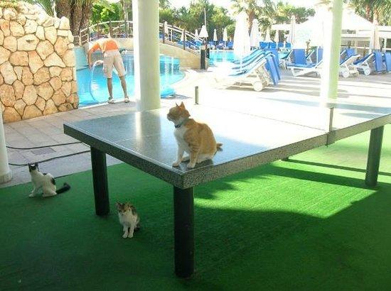 Mediterranean Beach Hotel : от СПА центра вид на бассейн