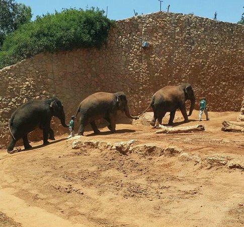 Tisch Family Zoological Gardens (Biblical Zoo): 5