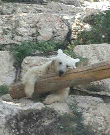 Tisch Family Zoological Gardens (Biblical Zoo): 1
