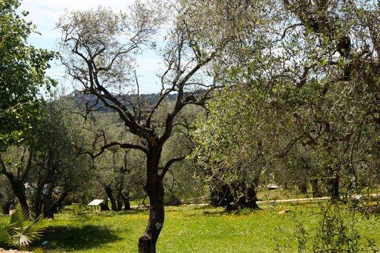 Club Med Opio Provence : L'Oliveraie