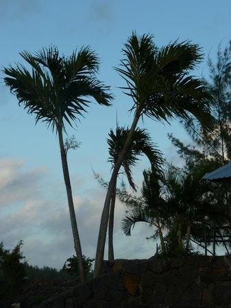 Calodyne Hotel: les palmistes de la plage