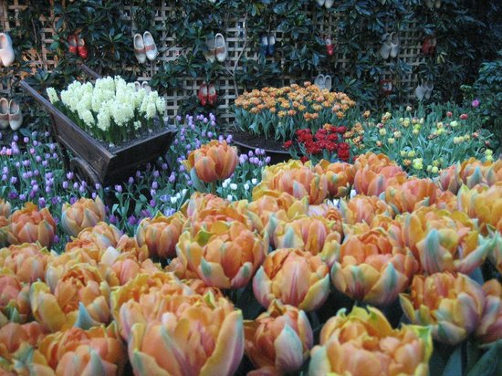 Flower Dome: beautiful....