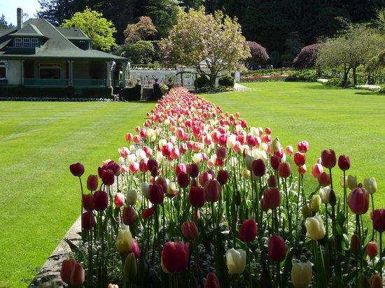 Butchart Gardens: Explosion of Tulips
